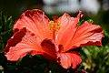 Flower (44271516780).jpg