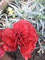Flower 20181201 091740.jpg