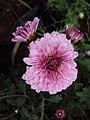 Flowers - Uncategorised Garden plants 292.JPG