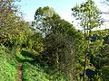 Footpath, Rack Hill, Chalford - geograph.org.uk - 1020156.jpg