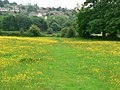 Footpath through the buttercups - geograph.org.uk - 835589.jpg