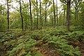 Forêt Départementale de Méridon à Chevreuse le 29 septembre 2017 - 15.jpg