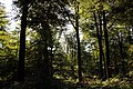 Forêt de Stambruges 16.jpg
