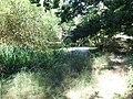 Forbach Teich an Quelle.jpg