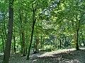 Forest - panoramio - paulnasca (63).jpg