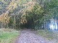 Forest Edge - geograph.org.uk - 1548837.jpg