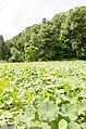 Forest Park, Springfield, MA 01108, USA - panoramio (51).jpg