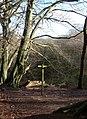 Forest Wood, Gradbach - geograph.org.uk - 680510.jpg