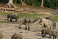 Forest elephant group 3 (6987537527).jpg