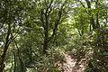 Forest in Mt.Kaba 03.jpg
