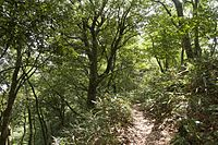 Forest in Mt.Kaba 03.jpg