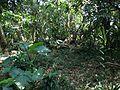 Forest in Sefa-Utaki 2.JPG