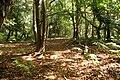 Forest in Studland.jpg