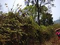 Forests of the Western Ghat.jpg