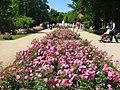 Forst-Rosengarten - Hauptpromenade (Rose Garden - Main Promenade) - geo.hlipp.de - 38965.jpg