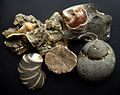 Fossil shells.jpg