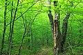 Frank Gantz Trail (Revisited) (3) (27614472905).jpg