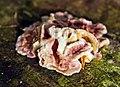 Fungi on tree 2.jpg