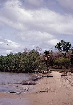 Gambia 082 from KG.jpg