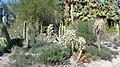Garden @ TLD - panoramio.jpg
