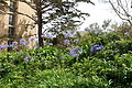 Garden - University of San Francisco - San Francisco, CA - DSC02665.JPG