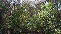 Garden Way - Wall - trees - streamlet - 17 Shahrivar st - Nishapur 09.JPG