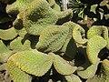 Gardenology.org-IMG 2243 hunt0903.jpg