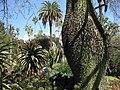 Gardenology.org-IMG 2667 hunt0903.jpg