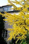 Garten im Innenhof des Valentinhauses 05.jpg
