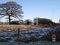 Gas, dogwood, prunings - geograph.org.uk - 1627930.jpg