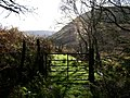 Gate from the forest - geograph.org.uk - 601046.jpg