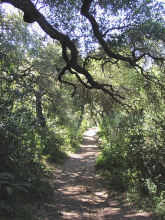 Gaviota State Park - Trail through Oak Woodlands plant community in Gaviota State Park