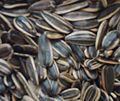 Gfp-sunflower-seeds.jpg