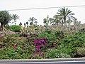 Giardino di cactus - panoramio.jpg