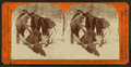 Glory enough for one day, from Robert N. Dennis collection of stereoscopic views 2.png