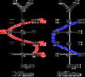 GlucoseGalactose.png