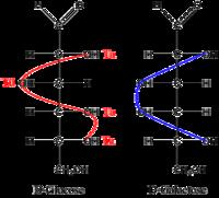 Struktur der D(+)-Glukose und D(+)-Galaktose in Form einer Fischer-Projektion