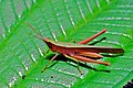 Grasshopper (6788262221).jpg
