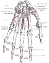 Gray's Anatomy - Wikipedia