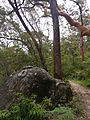 Great North Walk, Berowra Trail (13813320403).jpg