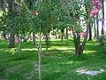 Guadalema de los Quintero (Sevilla), Parque (1).JPG