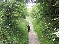Guinness leads the way to Wharram Percy - geograph.org.uk - 500488.jpg