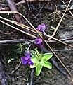 Gwaii Haanas National Park (26946038163).jpg
