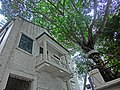 HK Sai Ying Pun 3rd Street WDCC 西區社區中心 Western District Community Centre balcony n tree Apr-2013.JPG