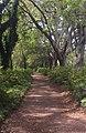Hampton Park - Allee of Oaks.jpg