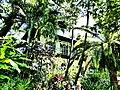 Hemingway House !.jpg