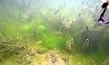 Herbier subaquatique d'eau douce de Ceratophyllum et algues filamenteuses lille aout 2018 a 03.jpg