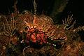 Hermit Crab (2058186496).jpg