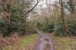 Hertford Heath north 2