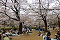 Hikarigaokapark-hanami-April4-2015.jpg